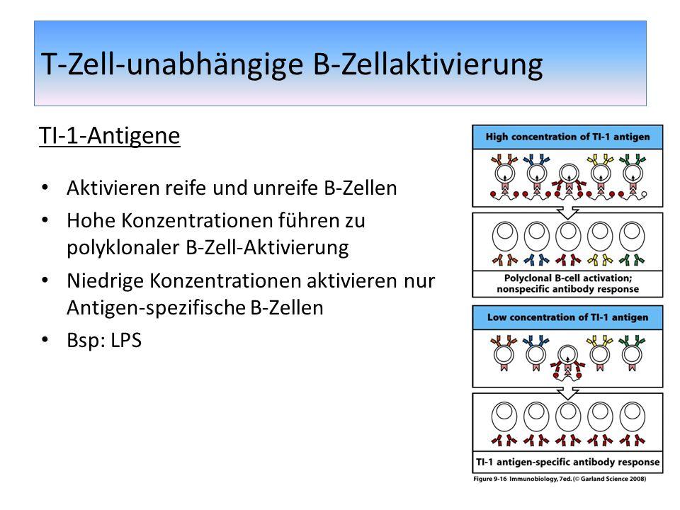 T-Zell-unabhängige B-Zellaktivierung Aktivieren reife und unreife B-Zellen Hohe Konzentrationen führen zu polyklonaler B-Zell-Aktivierung Niedrige Kon