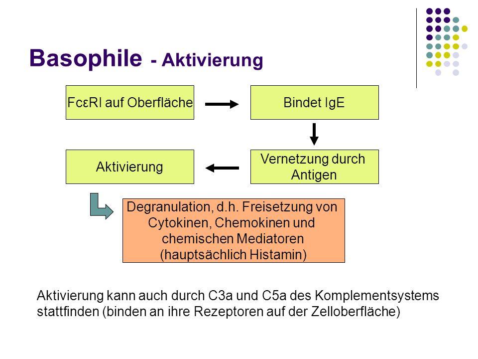 Basophile - Aktivierung FcεRI auf OberflächeBindet IgE Vernetzung durch Antigen Aktivierung Degranulation, d.h. Freisetzung von Cytokinen, Chemokinen