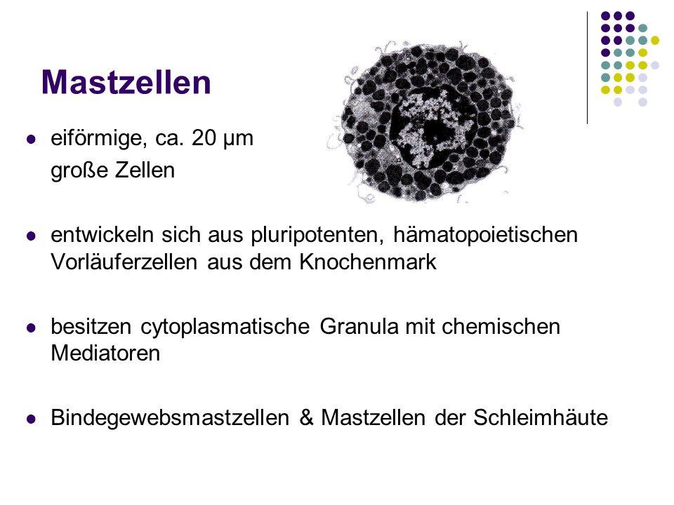 Mastzellen eiförmige, ca. 20 μm große Zellen entwickeln sich aus pluripotenten, hämatopoietischen Vorläuferzellen aus dem Knochenmark besitzen cytopla
