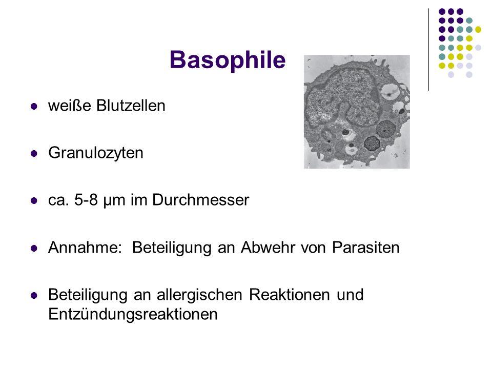 Basophile weiße Blutzellen Granulozyten ca. 5-8 μm im Durchmesser Annahme: Beteiligung an Abwehr von Parasiten Beteiligung an allergischen Reaktionen