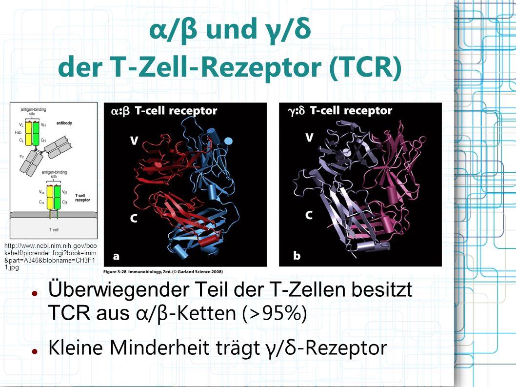 α/β und γ/δ der T-Zell-Rezeptor (TCR) Überwiegender Teil der T-Zellen besitzt TCR aus α/β-Ketten (>95%) Kleine Minderheit trägt γ/δ-Rezeptor http://ww