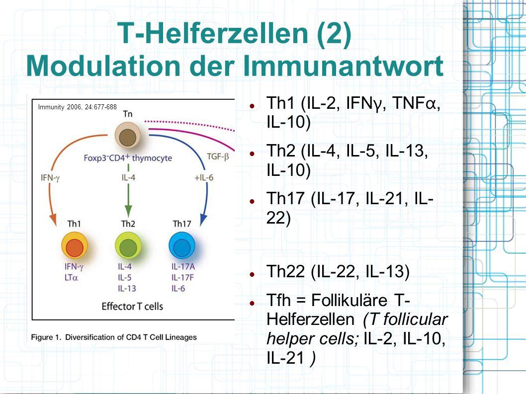 T-Helferzellen (2) Modulation der Immunantwort Th1 (IL-2, IFN γ, TNF α, IL-10) Th2 (IL-4, IL-5, IL-13, IL-10) Th17 (IL-17, IL-21, IL- 22) Th22 (IL-22,