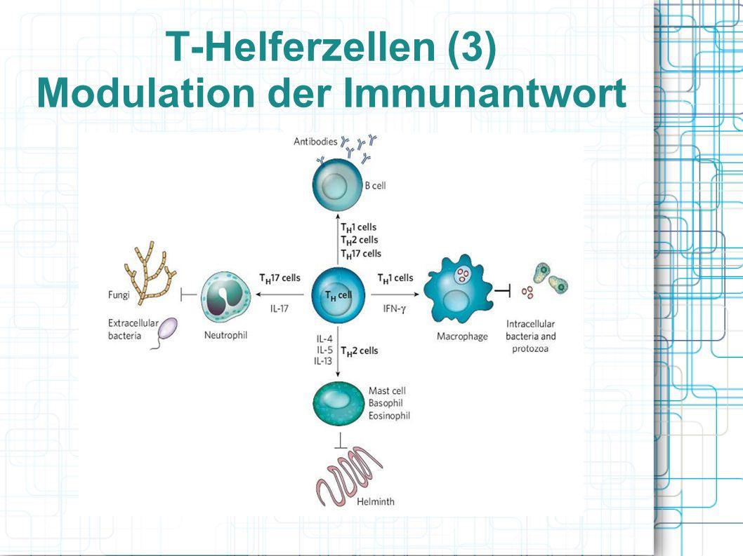 T-Helferzellen (3) Modulation der Immunantwort