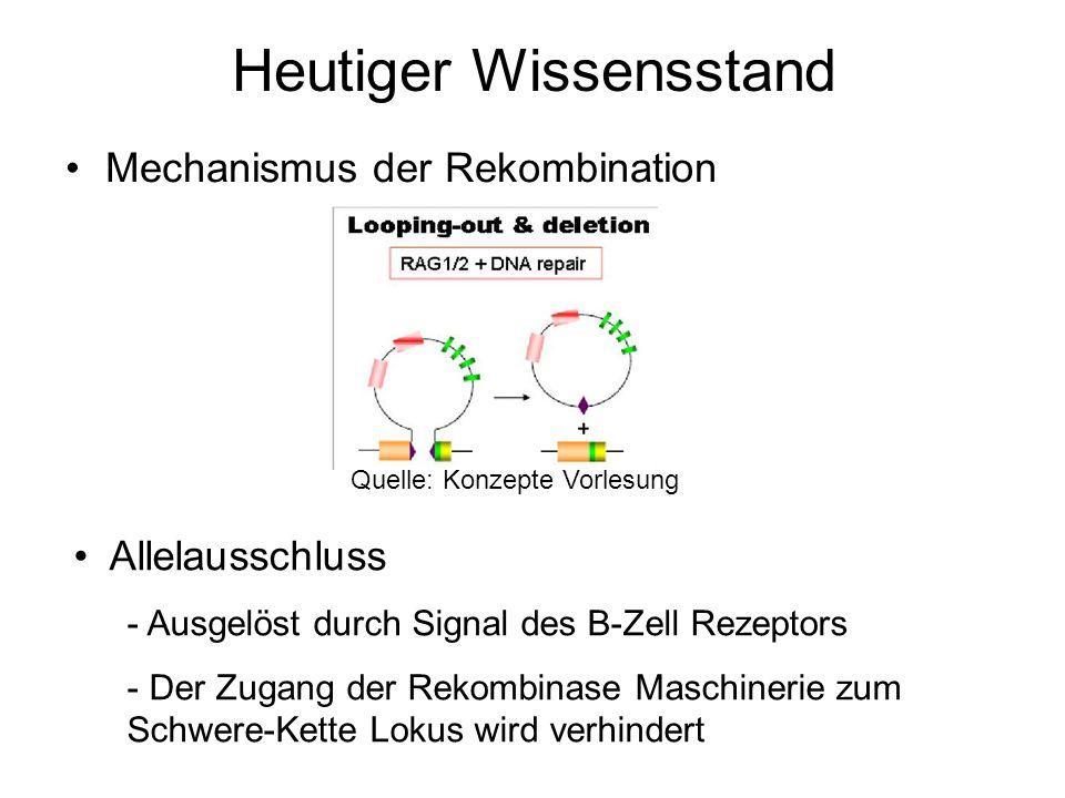 Heutiger Wissensstand Mechanismus der Rekombination Quelle: Konzepte Vorlesung Allelausschluss - Ausgelöst durch Signal des B-Zell Rezeptors - Der Zug