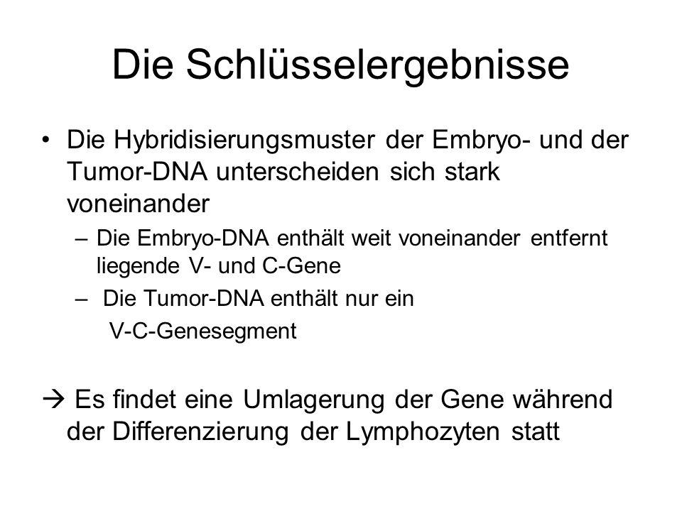 Die Schlüsselergebnisse Die Hybridisierungsmuster der Embryo- und der Tumor-DNA unterscheiden sich stark voneinander –Die Embryo-DNA enthält weit vone