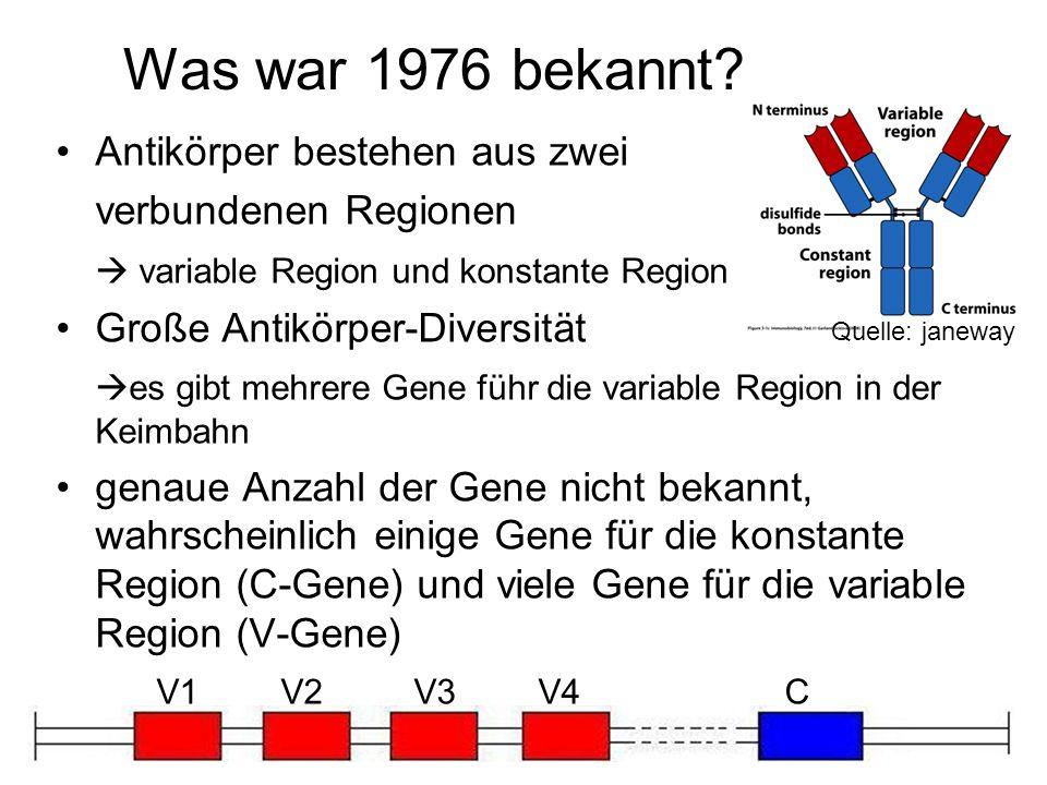 Was war 1976 bekannt? Antikörper bestehen aus zwei verbundenen Regionen variable Region und konstante Region Große Antikörper-Diversität es gibt mehre