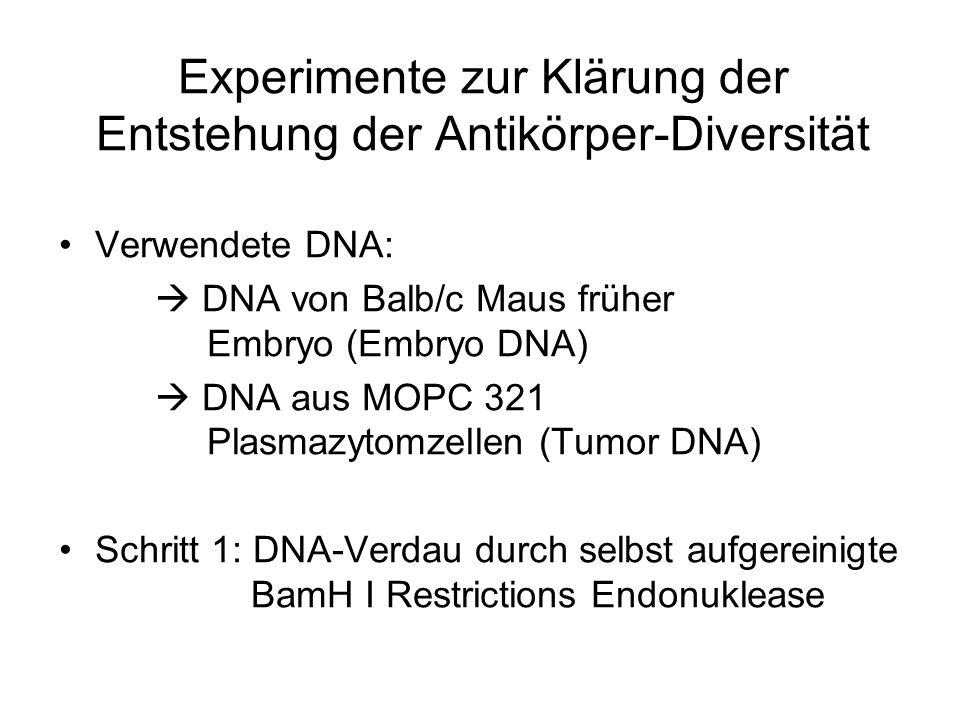 Experimente zur Klärung der Entstehung der Antikörper-Diversität Verwendete DNA: DNA von Balb/c Maus früher Embryo (Embryo DNA) DNA aus MOPC 321 Plasm