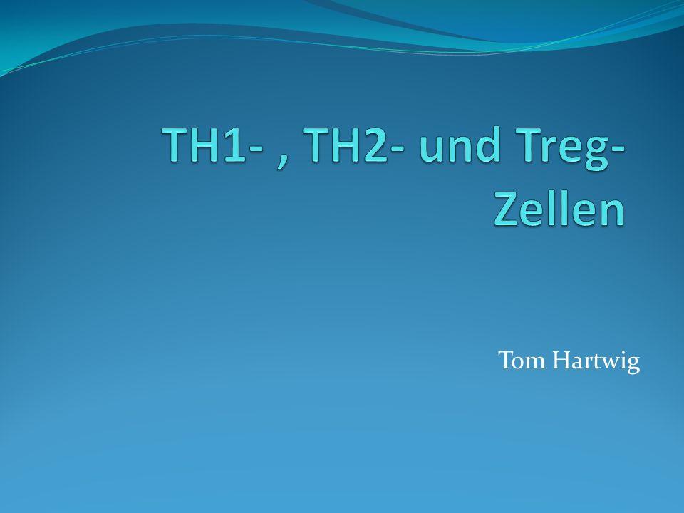 Differenzierung zu TH1 – oder TH2 Zellen Ausschlaggebend sind ausgeschüttete Cytokine, Co- stimulierende Faktoren und Aufbau des Peptid:MHC-Liganden