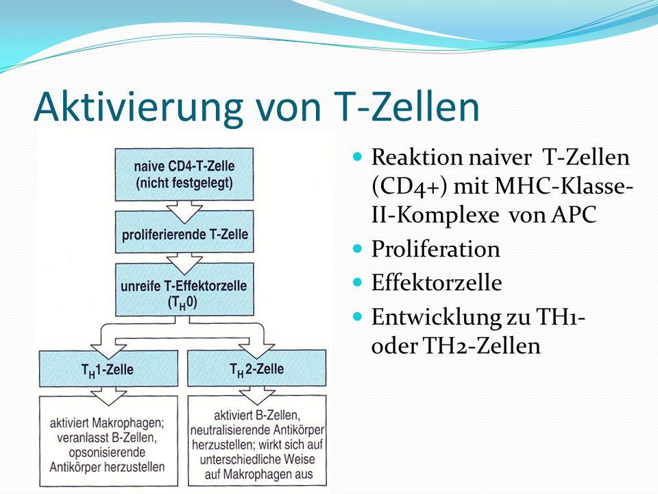 Aktivierung von T-Zellen Reaktion naiver T-Zellen (CD4+) mit MHC-Klasse- II-Komplexe von APC Proliferation Effektorzelle Entwicklung zu TH1- oder TH2-