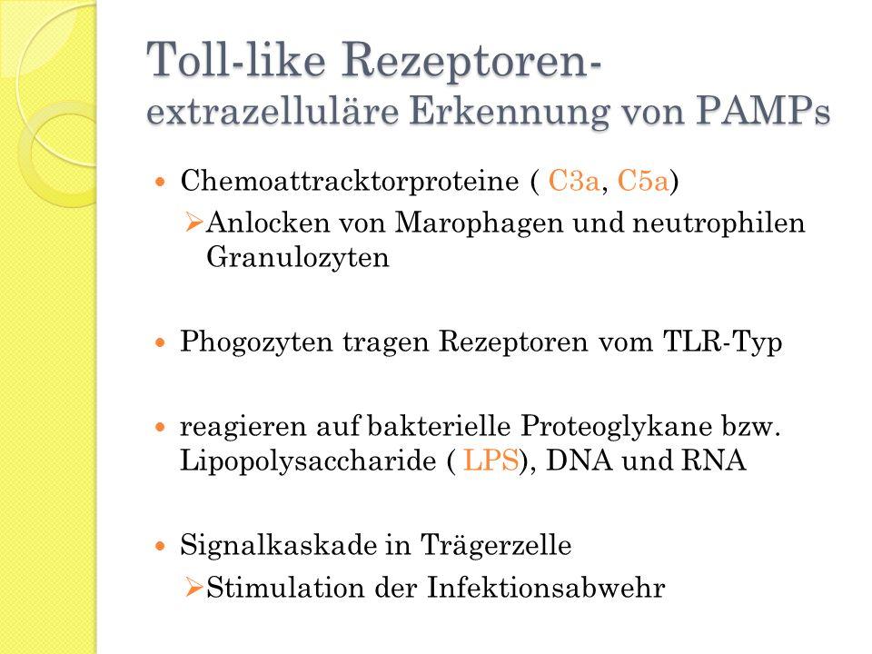 Toll-like Rezeptoren- extrazelluläre Erkennung von PAMPs Chemoattracktorproteine ( C3a, C5a) Anlocken von Marophagen und neutrophilen Granulozyten Pho