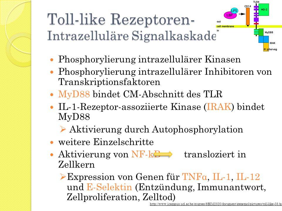 Toll-like Rezeptoren- Intrazelluläre Signalkaskade Phosphorylierung intrazellulärer Kinasen Phosphorylierung intrazellulärer Inhibitoren von Transkrip