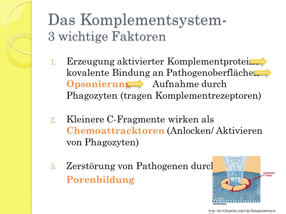 Das Komplementsystem- 3 wichtige Faktoren 1. Erzeugung aktivierter Komplementproteine kovalente Bindung an Pathogenoberflächen Opsonierung Aufnahme du
