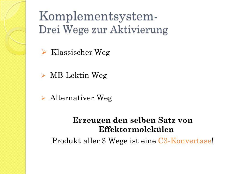 Komplementsystem- Drei Wege zur Aktivierung Klassischer Weg MB-Lektin Weg Alternativer Weg Erzeugen den selben Satz von Effektormolekülen Produkt alle