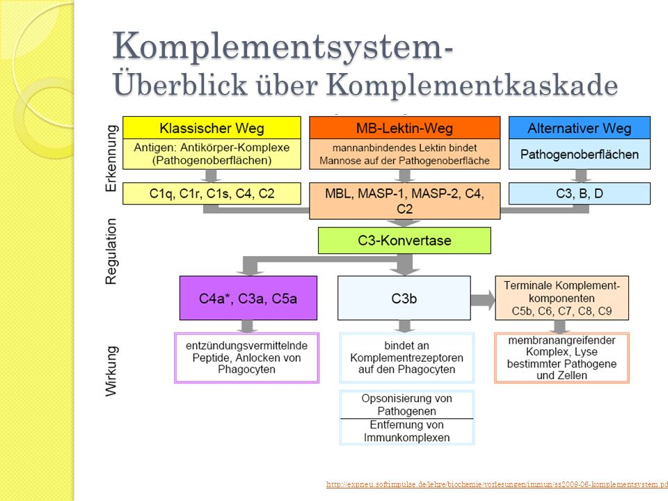 Komplementsystem- Überblick über Komplementkaskade http://expneu.softimpulse.de/lehre/biochemie/vorlesungen/immun/ss2009-06-komplementsystem.pdf