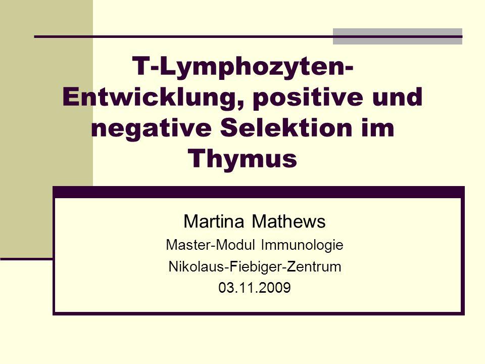 T-Lymphozyten- Entwicklung, positive und negative Selektion im Thymus Martina Mathews Master-Modul Immunologie Nikolaus-Fiebiger-Zentrum 03.11.2009