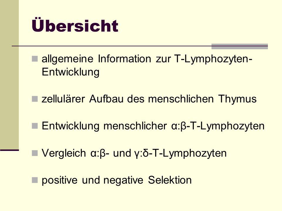 Übersicht allgemeine Information zur T-Lymphozyten- Entwicklung zellulärer Aufbau des menschlichen Thymus Entwicklung menschlicher α:β-T-Lymphozyten V