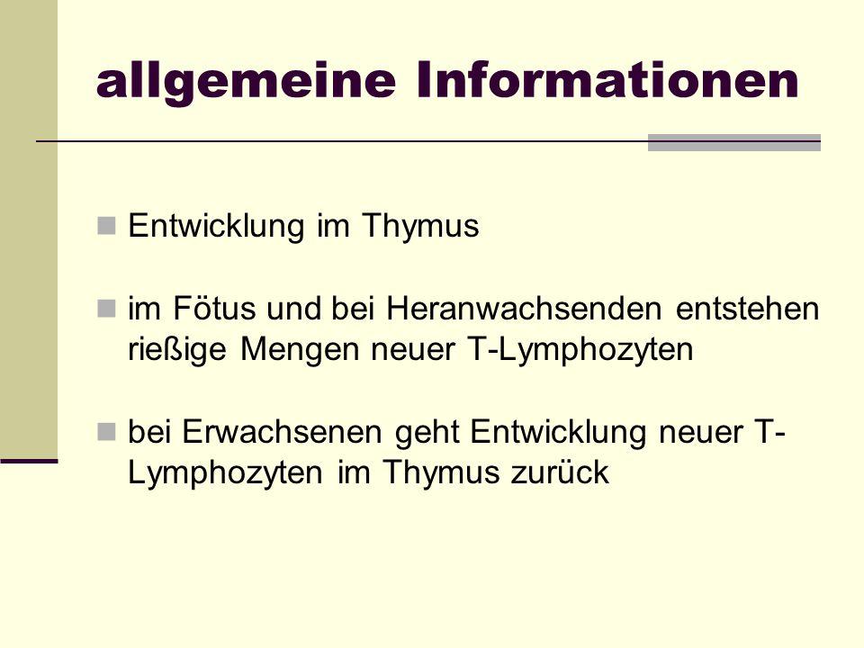 allgemeine Informationen Entwicklung im Thymus im Fötus und bei Heranwachsenden entstehen rießige Mengen neuer T-Lymphozyten bei Erwachsenen geht Entw