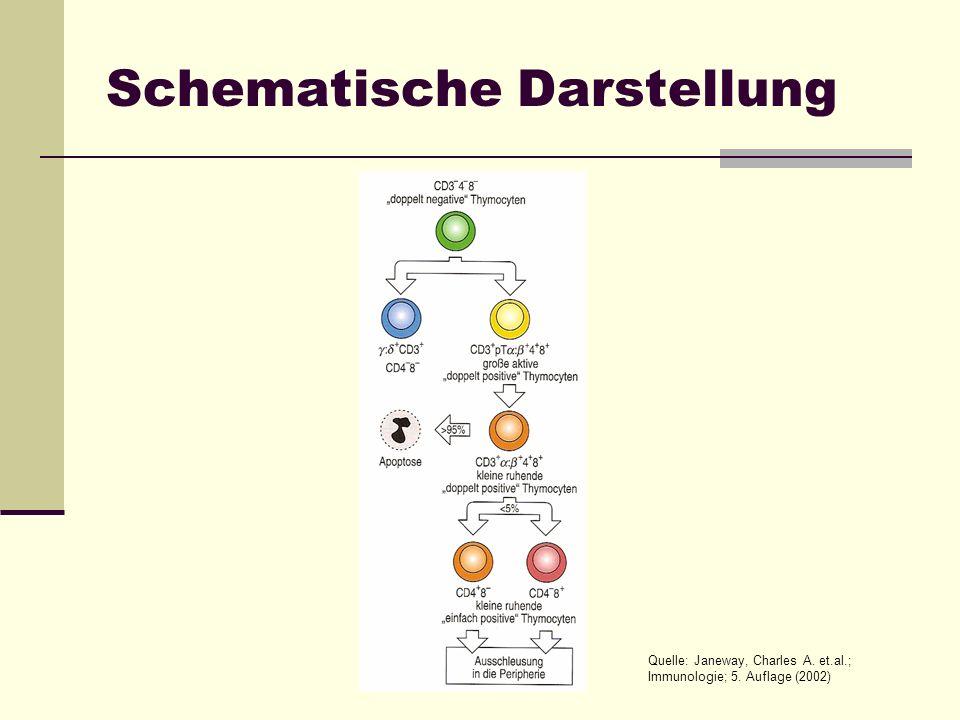 Schematische Darstellung Quelle: Janeway, Charles A. et.al.; Immunologie; 5. Auflage (2002)