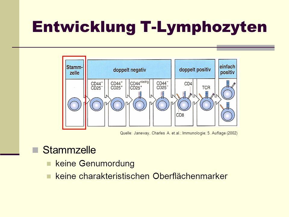 Entwicklung T-Lymphozyten Stammzelle keine Genumordung keine charakteristischen Oberflächenmarker Quelle: Janeway, Charles A. et.al.; Immunologie; 5.