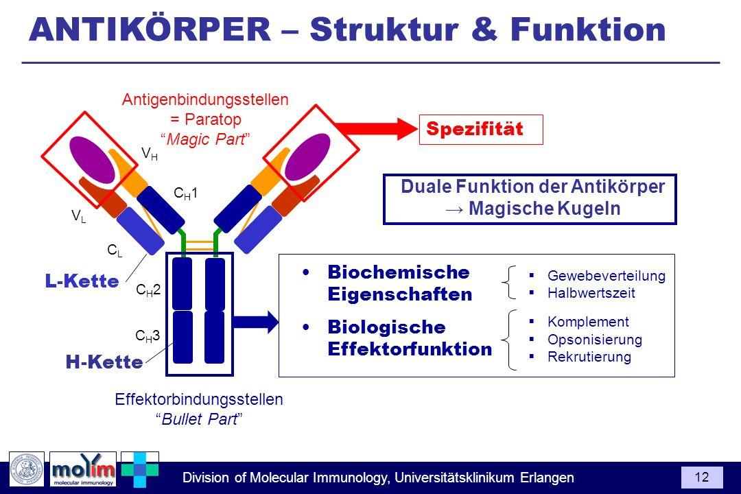 Division of Molecular Immunology, Universitätsklinikum Erlangen 12 Spezifität VLVL CLCL VHVH CH1CH1 CH2CH2 CH3CH3 Duale Funktion der Antikörper Magisc