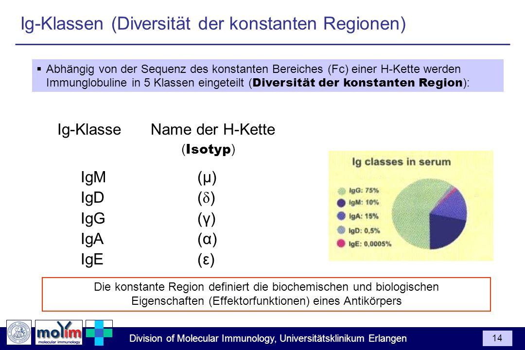 Division of Molecular Immunology, Universitätsklinikum Erlangen 14 Abhängig von der Sequenz des konstanten Bereiches (Fc) einer H-Kette werden Immungl