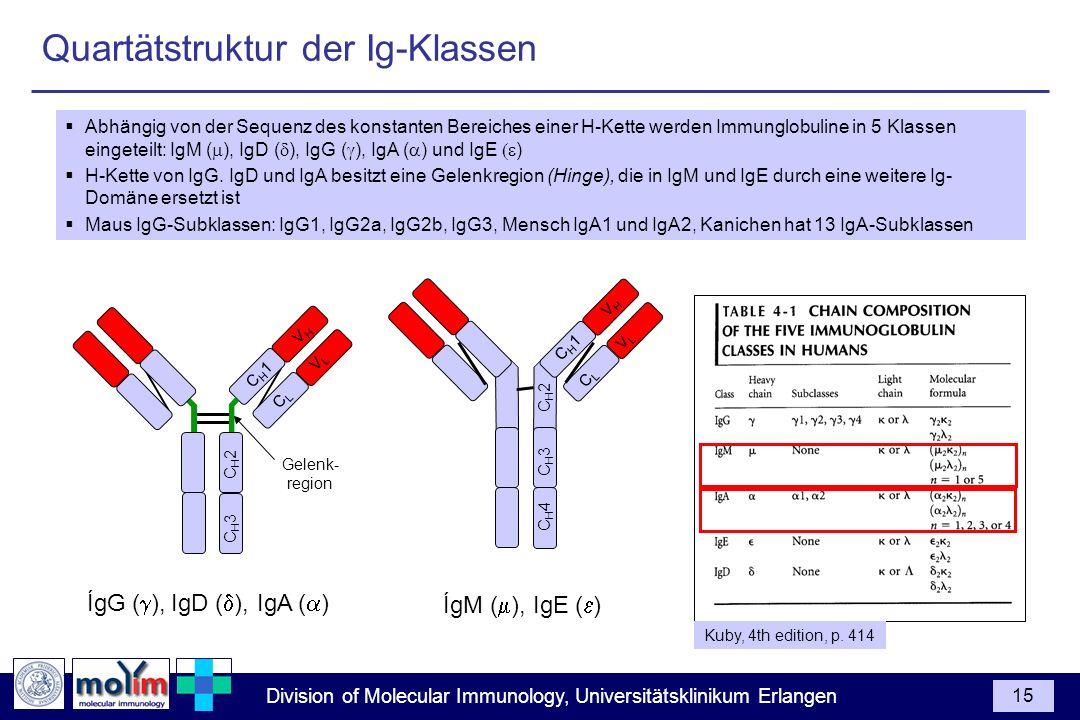 Division of Molecular Immunology, Universitätsklinikum Erlangen 15 Abhängig von der Sequenz des konstanten Bereiches einer H-Kette werden Immunglobuli