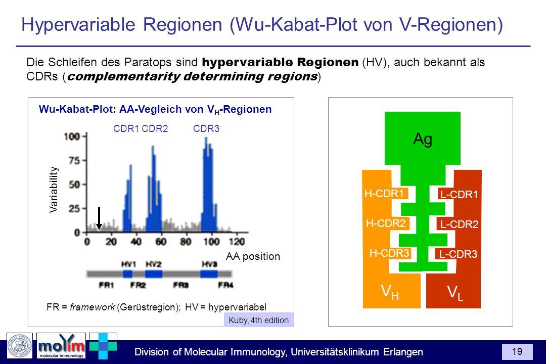 Division of Molecular Immunology, Universitätsklinikum Erlangen 19 FR = framework (Gerüstregion); HV = hypervariabel Wu-Kabat-Plot: AA-Vegleich von V