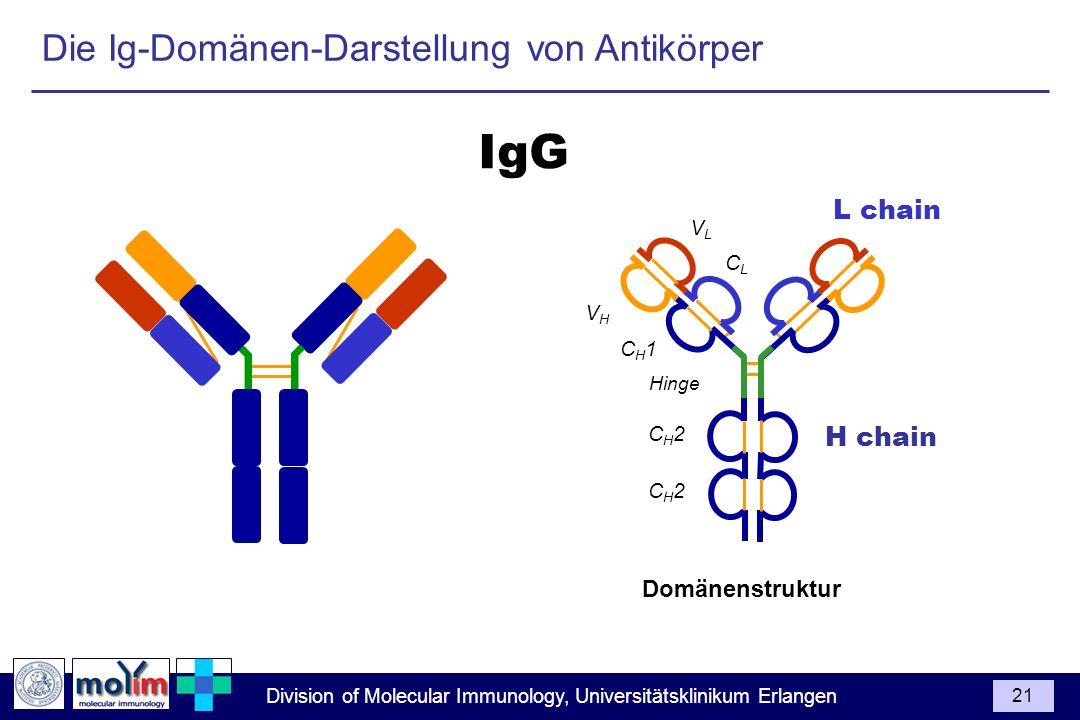 Division of Molecular Immunology, Universitätsklinikum Erlangen 21 Die Ig-Domänen-Darstellung von Antikörper CH1CH1 Hinge CH2CH2 CH2CH2 VHVH L chain H
