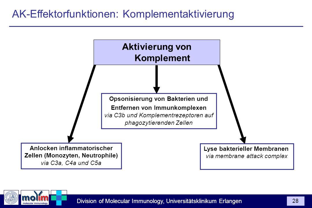 Division of Molecular Immunology, Universitätsklinikum Erlangen 28 Anlocken inflammatorischer Zellen (Monozyten, Neutrophile) via C3a, C4a und C5a Lys