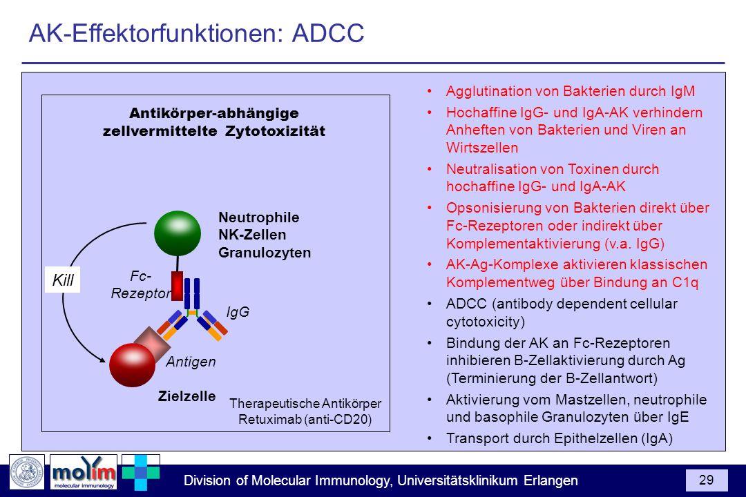 Division of Molecular Immunology, Universitätsklinikum Erlangen 29 Agglutination von Bakterien durch IgM Hochaffine IgG- und IgA-AK verhindern Anhefte