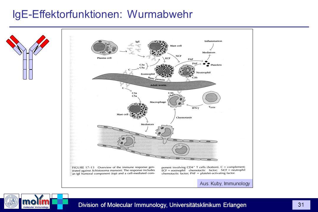 Division of Molecular Immunology, Universitätsklinikum Erlangen 31 Aus: Kuby, Immunology IgE-Effektorfunktionen: Wurmabwehr