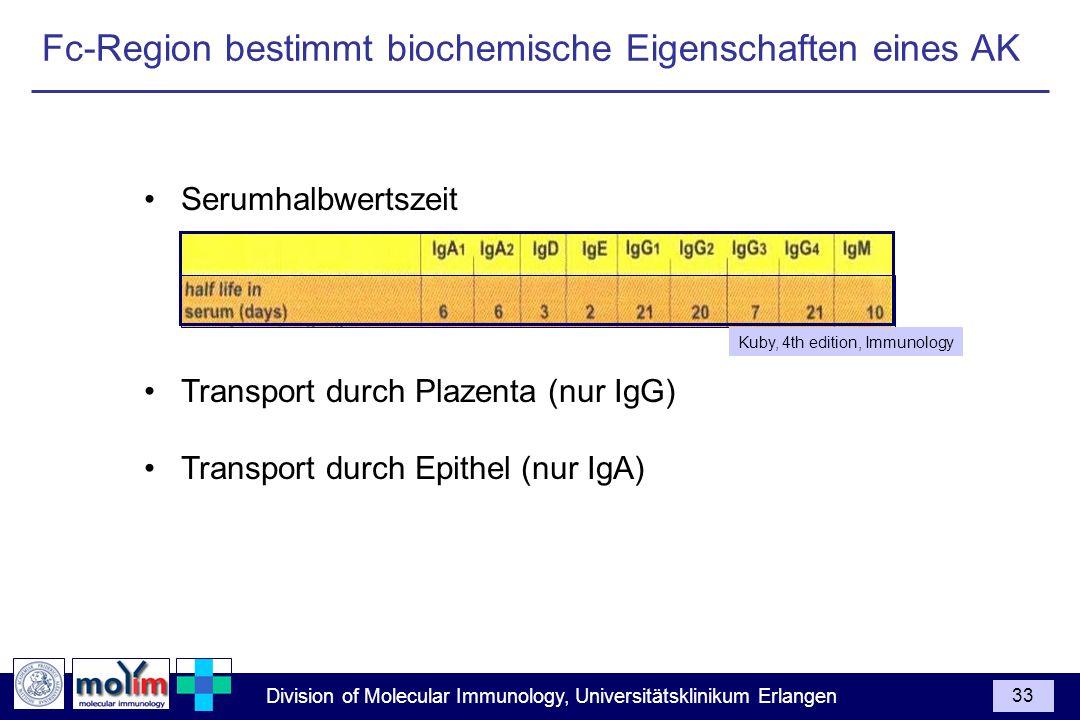 Division of Molecular Immunology, Universitätsklinikum Erlangen 33 Serumhalbwertszeit Transport durch Plazenta (nur IgG) Transport durch Epithel (nur