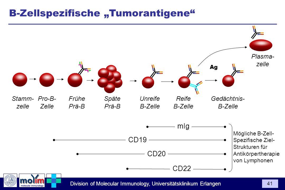 Division of Molecular Immunology, Universitätsklinikum Erlangen 41 Pro-B- Zelle Späte Prä-B Unreife B-Zelle Frühe Prä-B Stamm- zelle Reife B-Zelle Pla