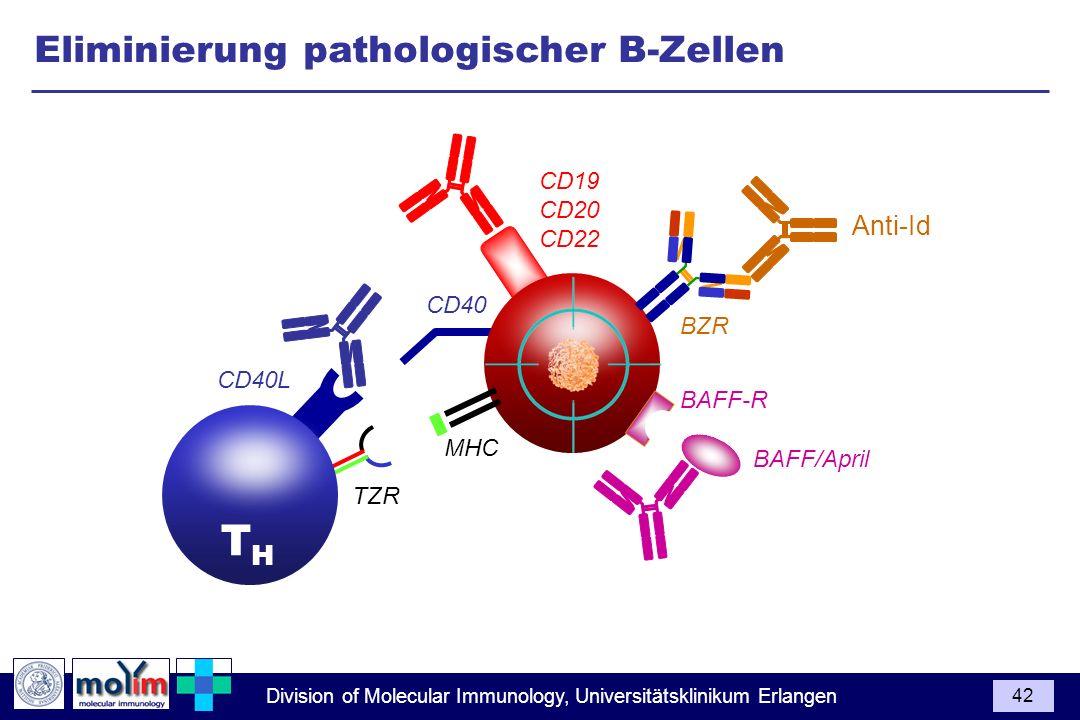 Division of Molecular Immunology, Universitätsklinikum Erlangen 42 CD40L BZR CD40 1 2 TZR THTH CD19 CD20 CD22 BAFF/April MHC BAFF-R Anti-Id Eliminieru
