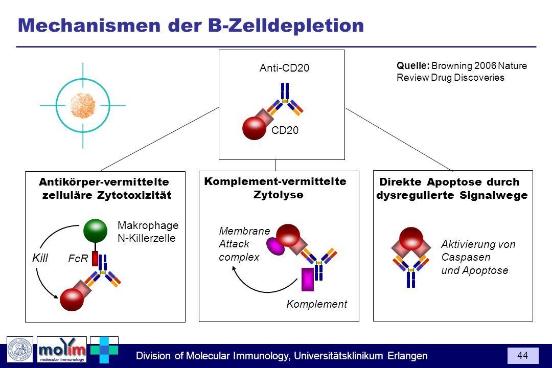 Division of Molecular Immunology, Universitätsklinikum Erlangen 44 Anti-CD20 CD20 Quelle: Browning 2006 Nature Review Drug Discoveries Aktivierung von