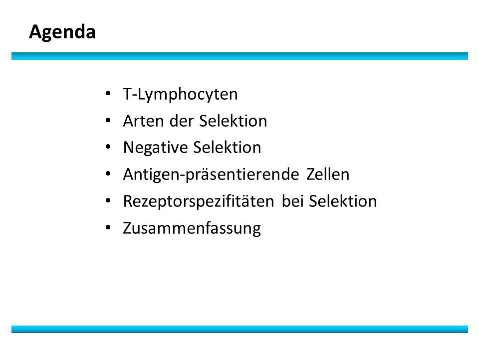Agenda T-Lymphocyten Arten der Selektion Negative Selektion Antigen-präsentierende Zellen Rezeptorspezifitäten bei Selektion Zusammenfassung