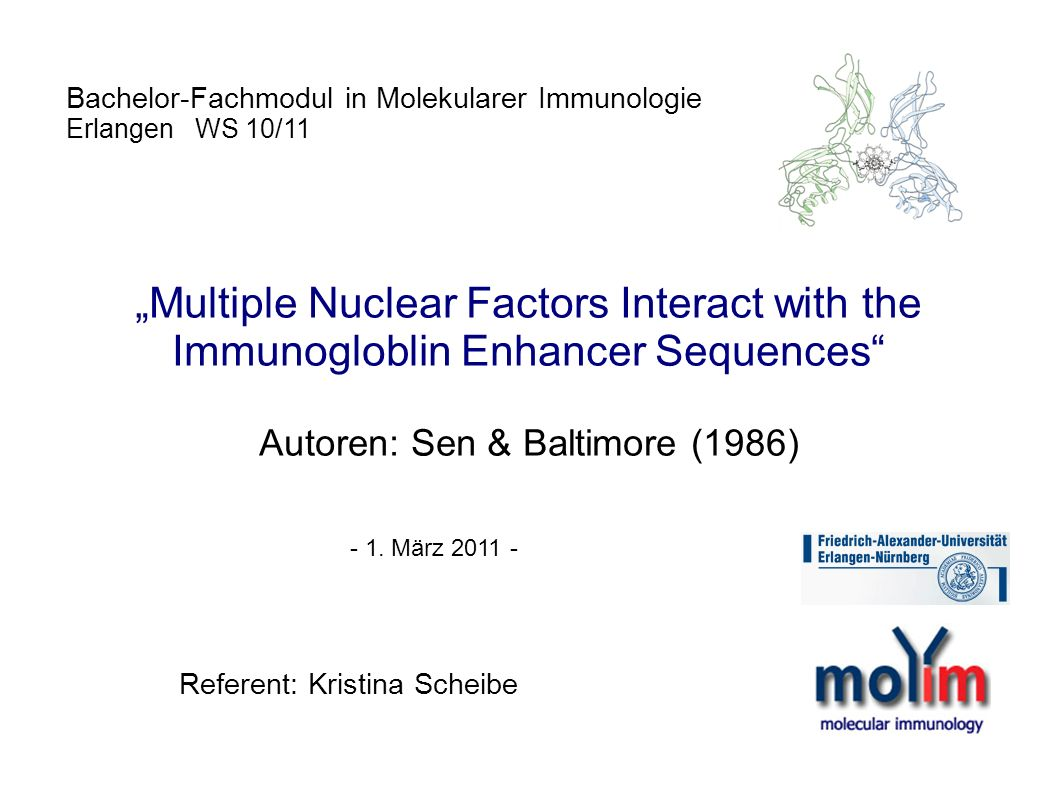 Bachelor-Fachmodul in Molekularer Immunologie Erlangen WS 10/11 Multiple Nuclear Factors Interact with the Immunogloblin Enhancer Sequences Autoren: S
