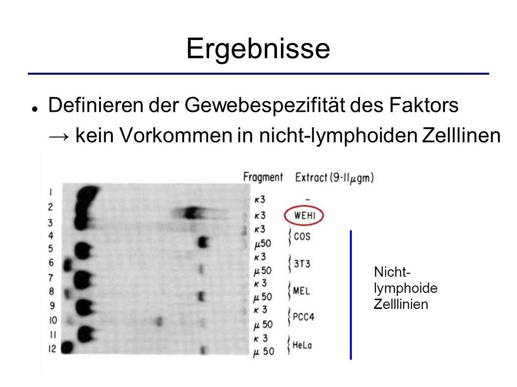 Ergebnisse Definieren der Gewebespezifität des Faktors kein Vorkommen in nicht-lymphoiden Zelllinen Nicht- lymphoide Zelllinien