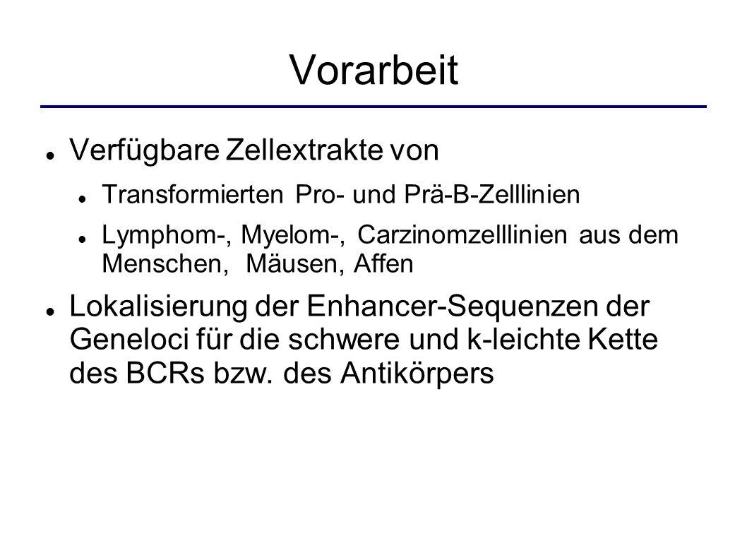 Aktueller Kenntnisstand Dreidimensionale Struktur und Funktionsweise Quelle: Knippers, R.
