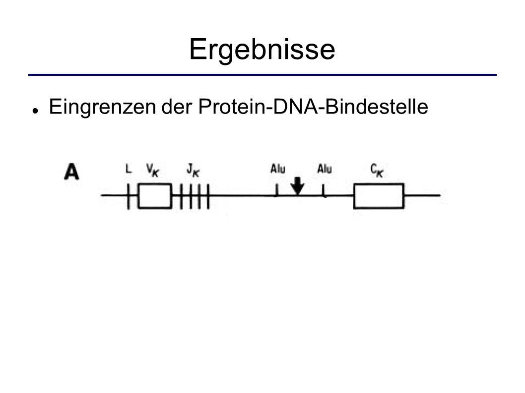 Ergebnisse Eingrenzen der Protein-DNA-Bindestelle
