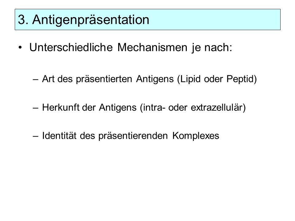 3. Antigenpräsentation Unterschiedliche Mechanismen je nach: –Art des präsentierten Antigens (Lipid oder Peptid) –Herkunft der Antigens (intra- oder e