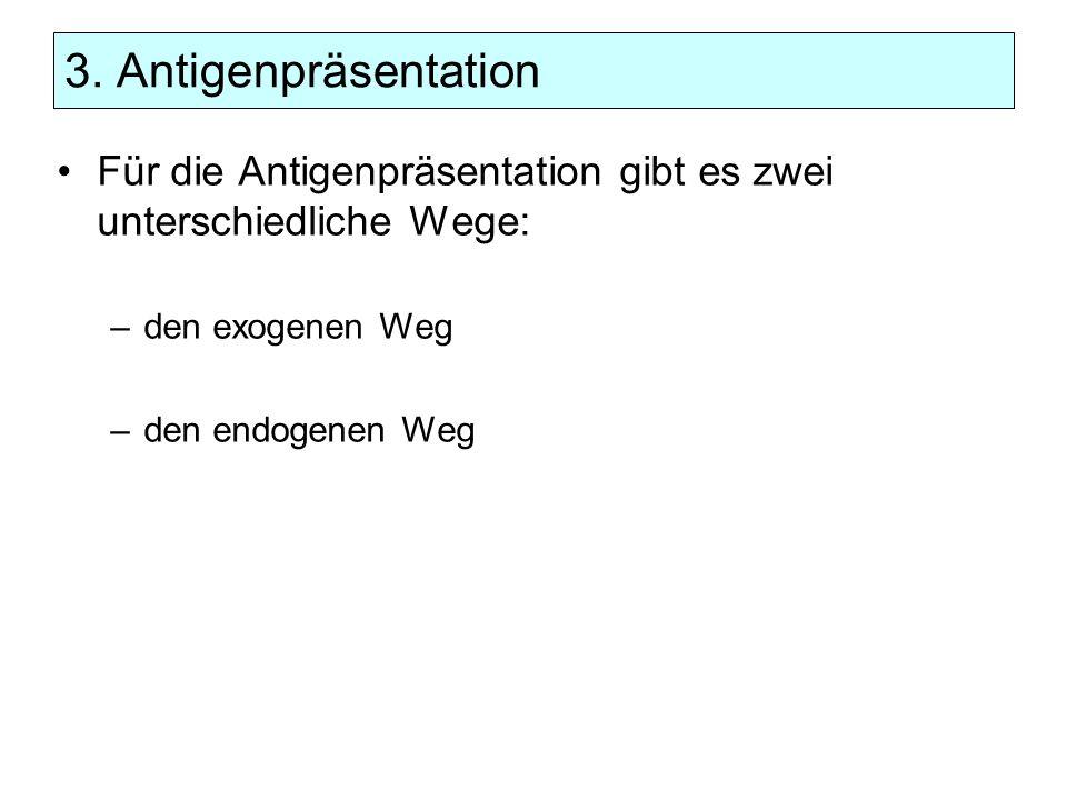 3. Antigenpräsentation Für die Antigenpräsentation gibt es zwei unterschiedliche Wege: –den exogenen Weg –den endogenen Weg