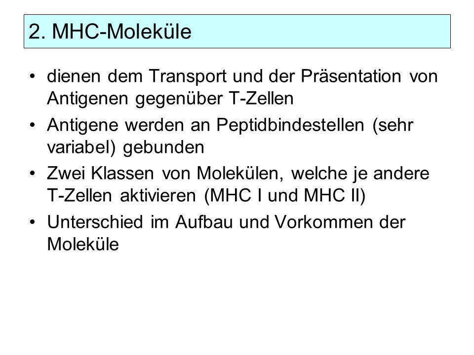 2. MHC-Moleküle dienen dem Transport und der Präsentation von Antigenen gegenüber T-Zellen Antigene werden an Peptidbindestellen (sehr variabel) gebun