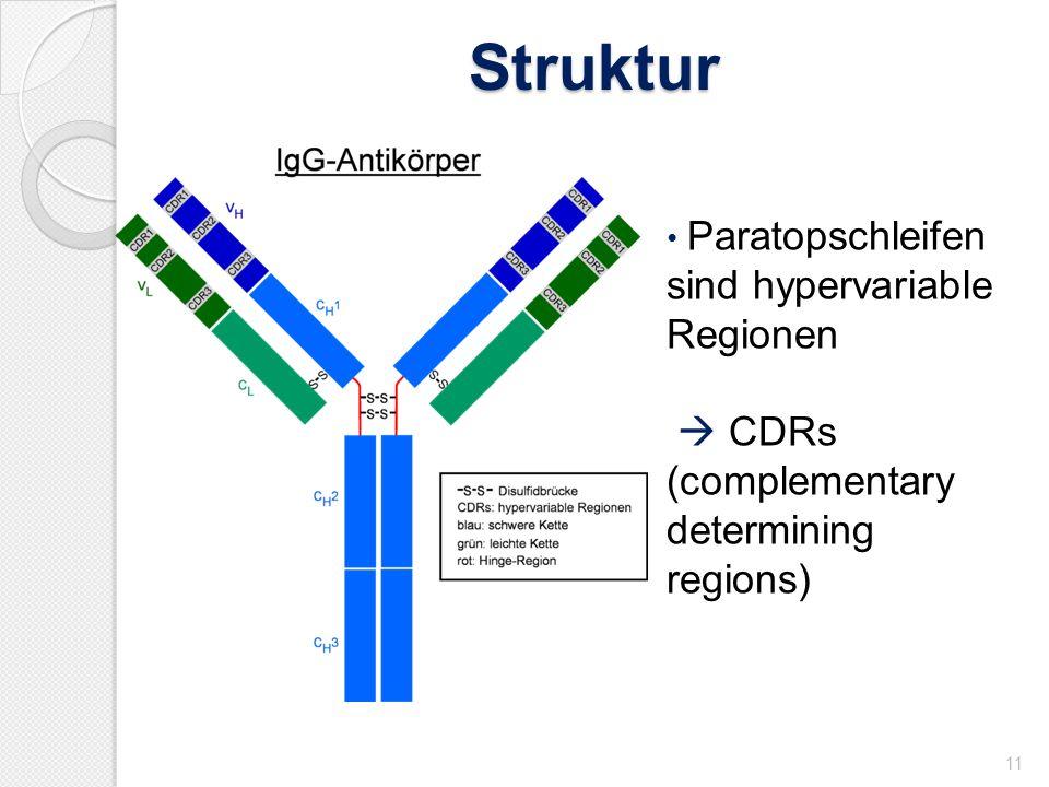 Struktur 11 Paratopschleifen sind hypervariable Regionen CDRs (complementary determining regions)