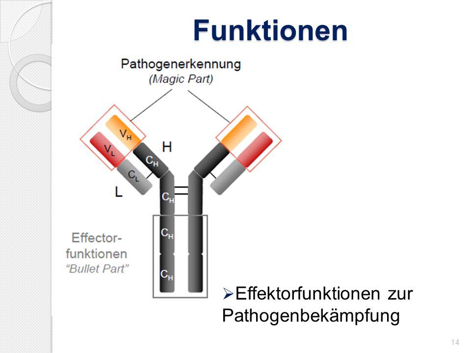 Funktionen 14 Effektorfunktionen zur Pathogenbekämpfung