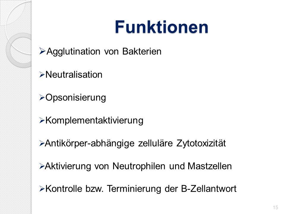 Funktionen 15 Agglutination von Bakterien Neutralisation Opsonisierung Komplementaktivierung Antikörper-abhängige zelluläre Zytotoxizität Aktivierung