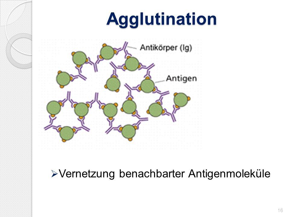 Agglutination 16 Vernetzung benachbarter Antigenmoleküle