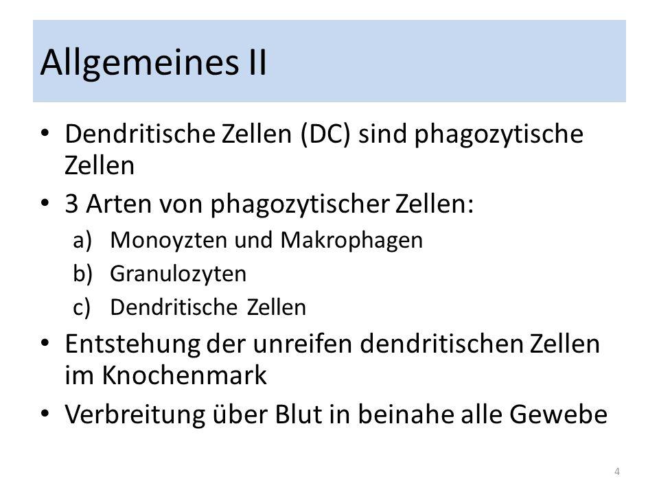 Allgemeines II Dendritische Zellen (DC) sind phagozytische Zellen 3 Arten von phagozytischer Zellen: a)Monoyzten und Makrophagen b)Granulozyten c)Dend