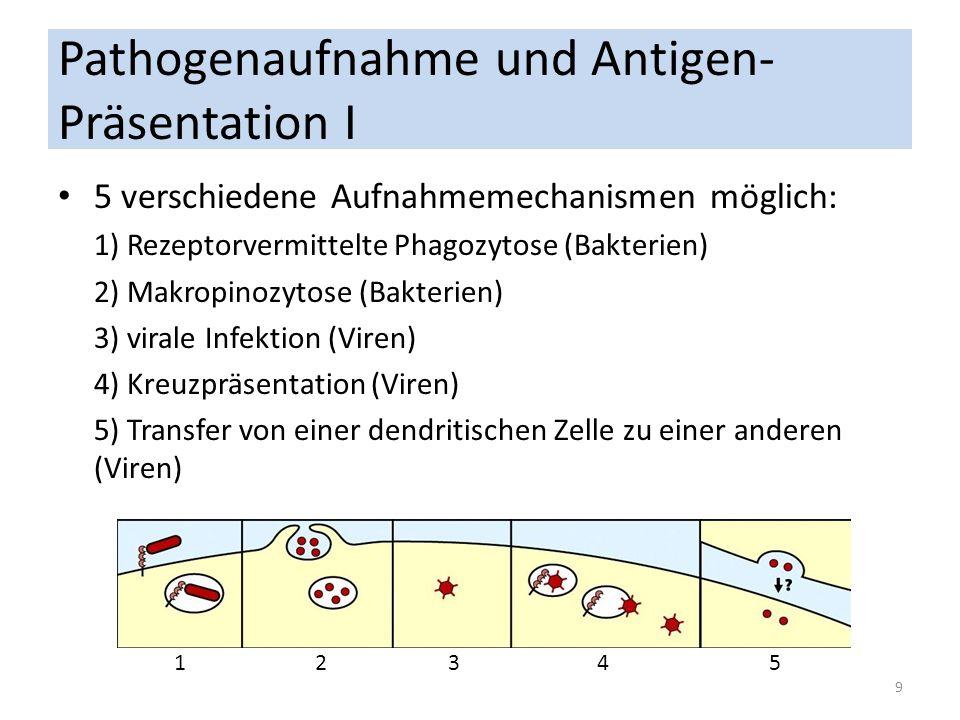 Pathogenaufnahme und Antigen- Präsentation I 5 verschiedene Aufnahmemechanismen möglich: 1) Rezeptorvermittelte Phagozytose (Bakterien) 2) Makropinozy