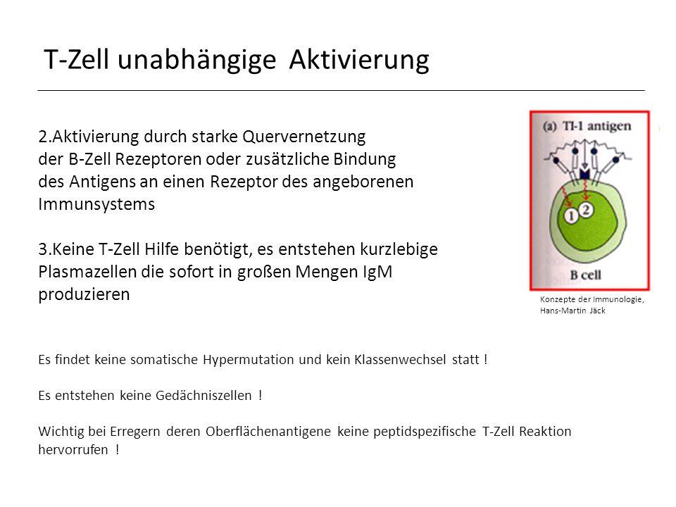 T-Zell-unabhängige Aktivierung Antigene: TI-Antigene (Thymus independent), keine Proteine sondern hauptsächlich bakterielle Polysaccharide, Lipopolysaccharide, aber auch polymere Proteine Unterteilung: TI-1-Antigene -> aktivieren reife und unreife B-Zellen, bei hoher Konzentration polyklonale B-Zell Aktivierung, bei geringer Konzentration spezifische Aktivierung, z.B.